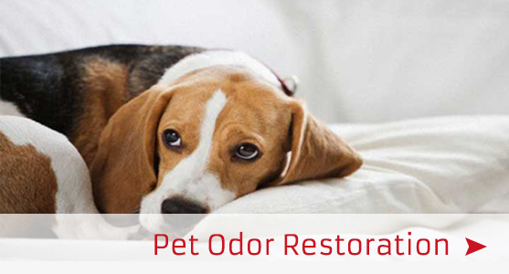 pet odor restoration